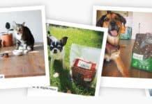 Natures Logic Dog Food Review