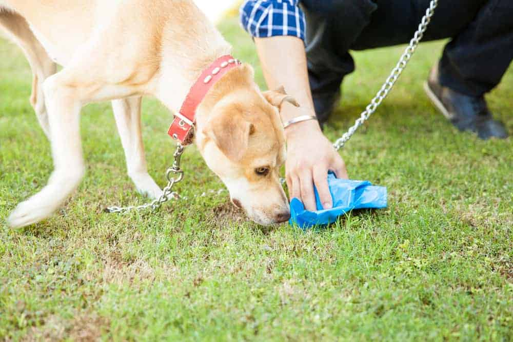 How To Harden Dog Poop? Here's How And Why