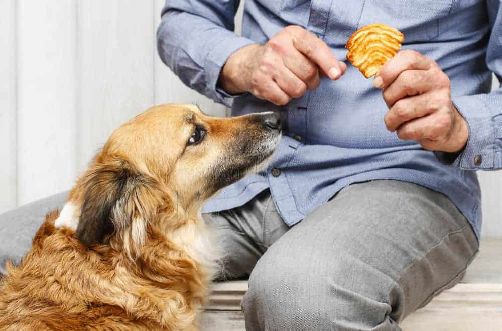 Friends forever man feeding his lovely dog with dry dog food