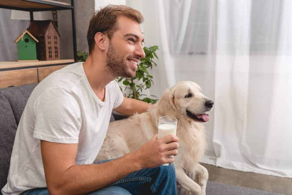Handsome young man with glass of milk and adorable golden retriever dog sitting on couch and looking away