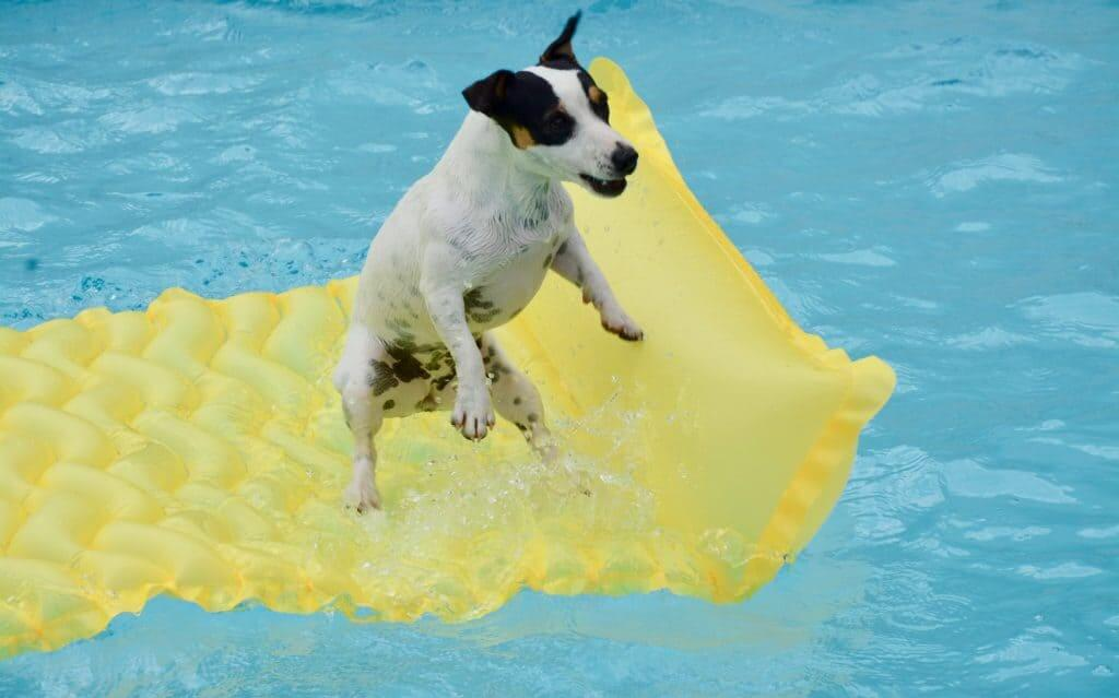 dog is happy when swimming in the pool