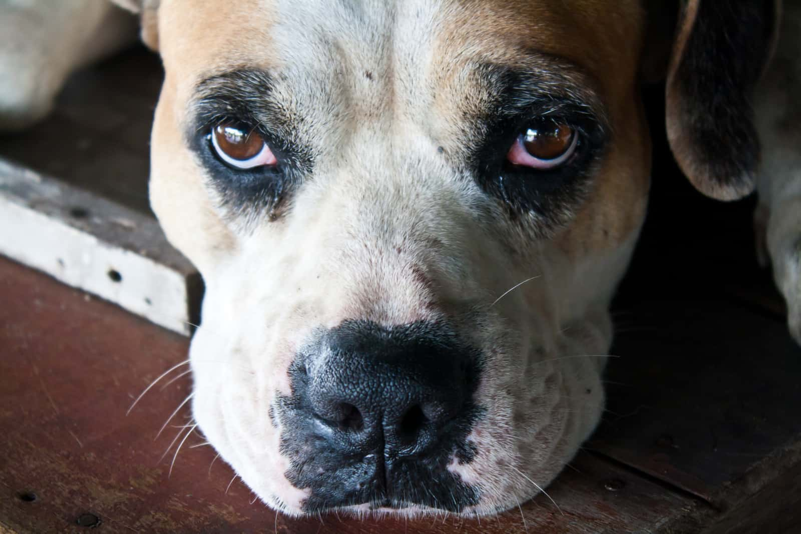 a dog that wants to cry